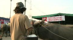 Buffalo handler 3 Stock Footage
