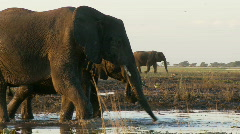 Elephant using its trunk  Stock Footage