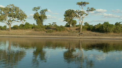 Chobe River - stock footage