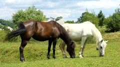 Black and white horses on the meadow - stock footage