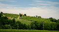 Vineyard hill HD Footage