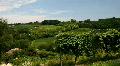 Vineyard HD Footage