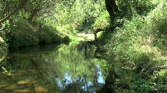 Creek Running Through Chaparral Stock Footage