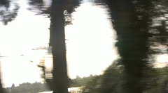 Trees go Rushing by Stock Footage