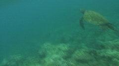 Sea Turlte Stock Footage
