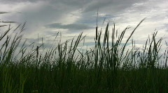 Marsh Stock Footage