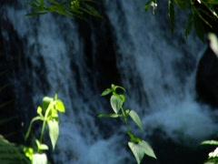 Waterfall - stock footage
