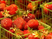 Stock Video Footage of Fresh Strawberries for Sale 066