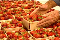 Fresh Strawberries for Sale 068 Stock Footage