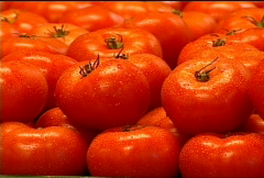 Fresh Tomatoes for Sale 069 Stock Footage