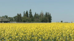 Highway Truck rolling by Canola field 003 Stock Footage