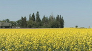 Stock Video Footage of Highway Truck rolling by Canola field 003