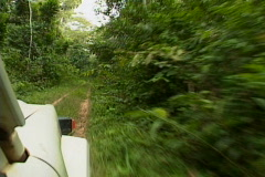 Jungle Road - stock footage