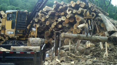 Cutting Timber with giant chainsaw logging clear cutting (hd) c - stock footage
