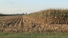 Indiana Corn field - stock footage