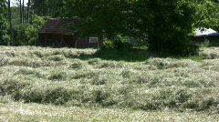 Hay windrows Stock Footage
