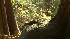 Squirrel Moves Out Of View Stock Footage