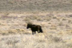 Wild horses 02 Stock Footage