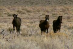 Wild horses 06 Stock Footage