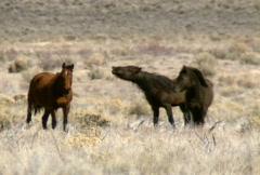 Wild horses 07 Stock Footage