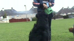Dog given treat Stock Footage