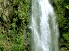 Forest Falls - stock footage