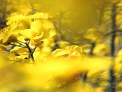 Mellow Yellow 2 Stock Footage