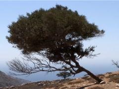 Mountain Tree 1 Stock Footage