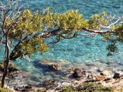 Sea Tree 1 Stock Footage