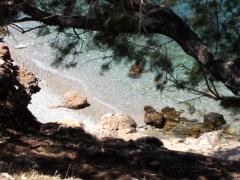 Sea Tree 3 Stock Footage
