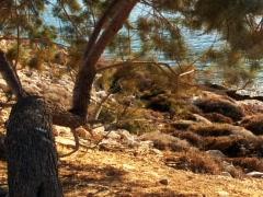 Sea Tree 5 Stock Footage