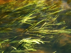 Straw Water Stock Footage