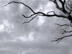Haunted Forest Stock Footage
