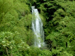 Jungle Falls Stock Footage