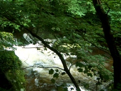 Rivers Meet Stock Footage