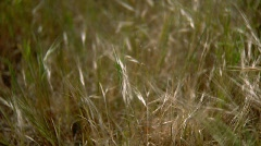 Soft Sway Stock Footage