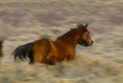 Wild horses 34 Stock Footage