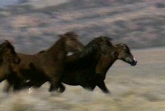 Villihevosia 29 Arkistovideo