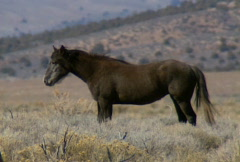 Wild horses 28 Stock Footage