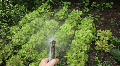Garden Hose Spraying Organic Vegetables Footage