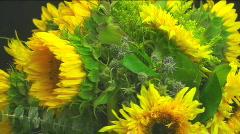 Sunflower Trio Stock Footage