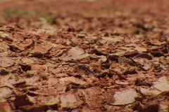 Kenya dry river bed Stock Footage