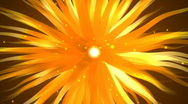 Stock Video Footage of Yellow/Orange Floral Background - Abstract Background 63 (HD)