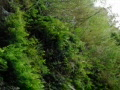 High Speed Camera : Waterfalls and Ferns Slow Motion Web Footage