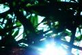 Bamboo Sunlight 1 Loop Footage
