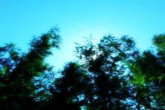 Bamboo Sunlight 4 dolly Stock Footage