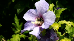 Pollen - stock footage