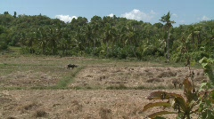 Poerto Princesa rice fields 2 Stock Footage