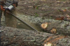 Logging chainsaws 02 Stock Footage