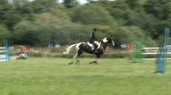 Stock Video Footage of show jumping with refusal